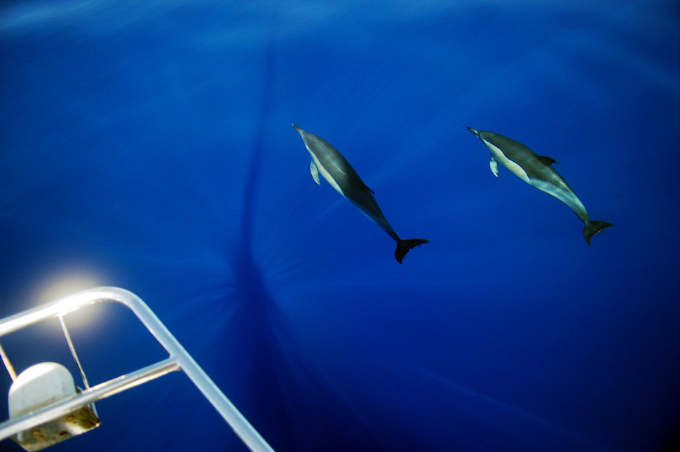 Delfiinit, Jussi Santala