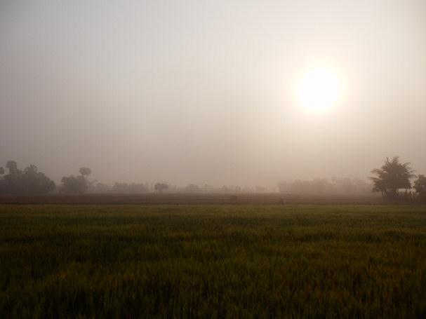 Näkymä aamuisen riisipellon yli   Maija Kauhanen   Kulkuri.org
