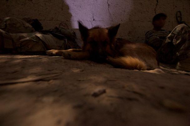Amerikkalainen pommikoira lepää   © Michael Yon   Kulkuri.org