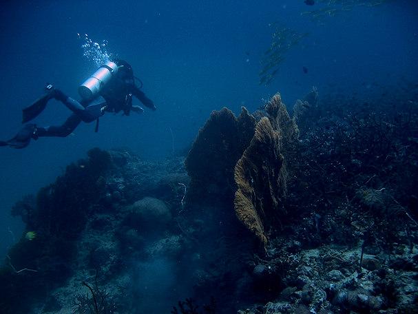 Sukellus syvyyksiin, suuri sininen, mystinen merenpohja | Sigmund | kulkuri.org