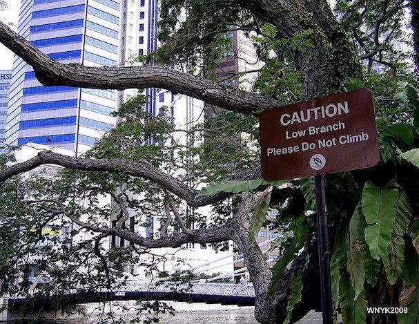 Puissa kiipeily ei tietenkään ole soveliasta | William Ng | kulkuri.org