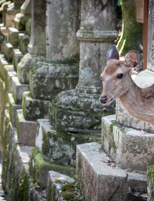 Viikon kuva: Nara, Japani