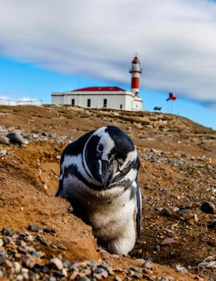 Viikon kuva: Isla Magdalena, Chile