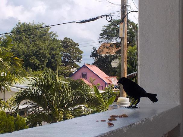 Lintu joogaretriisissä, ikkunalaudalla | Maria Paldanius | kulkuri.org