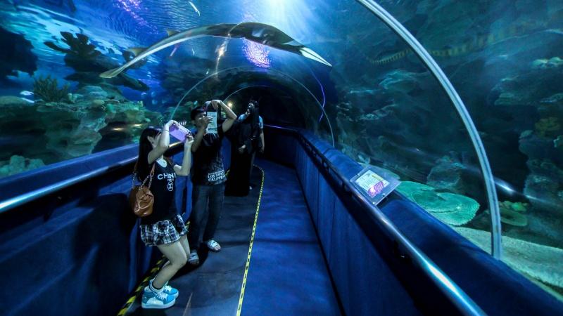 kuala lumpurin akvaario malesia - lee kasemets