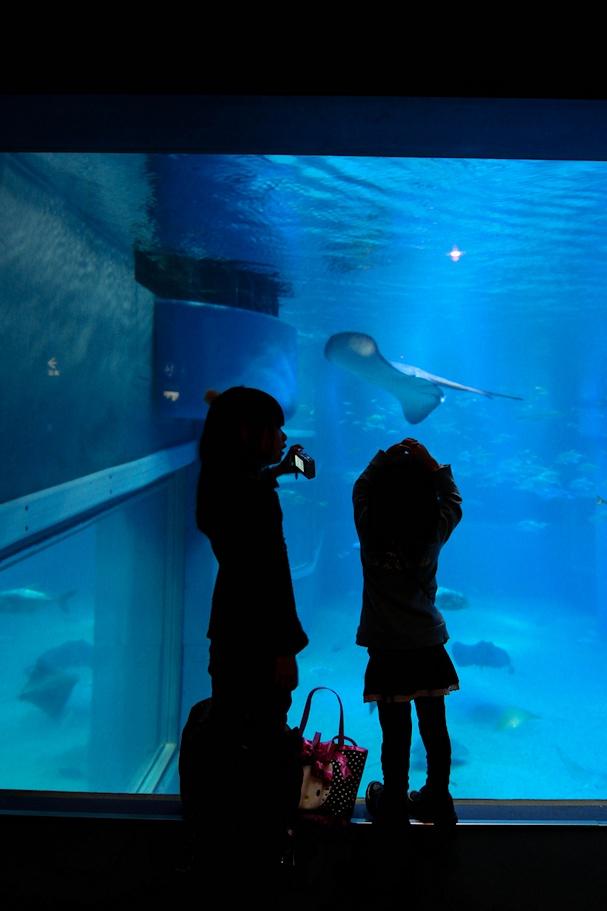 lapsia akvaariossa - lee kasemets