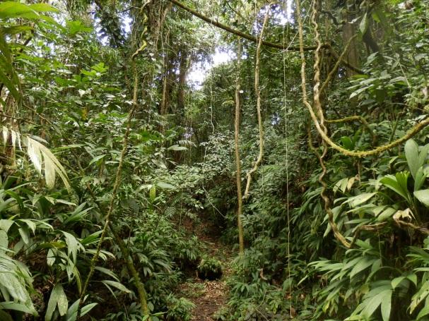 Río Dulcen sademetsissä machete voi tulla tarpeeseen